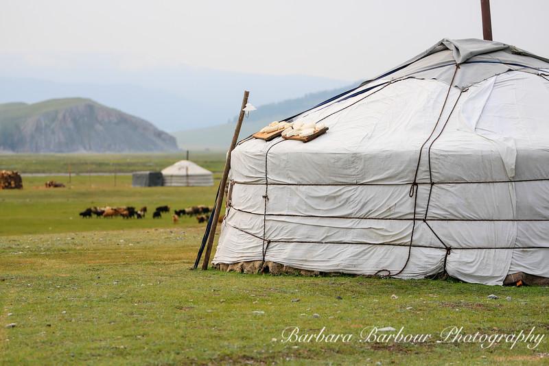 Ger, Hovsgol Province, Mongolia