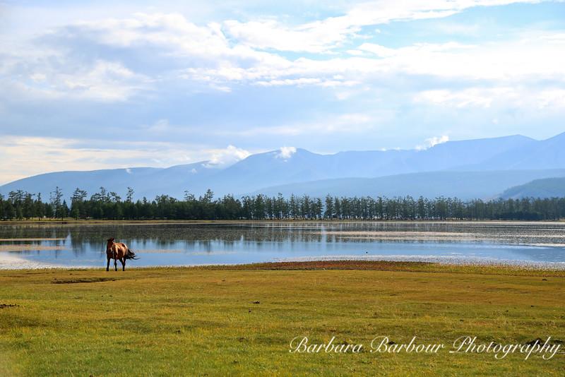 Horse at Lake Hovsgol, Mongolia