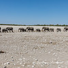 Herd of Elephants on the move