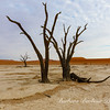 Deadvlei in Namib-Nauukluff National Park, Sossusvlei