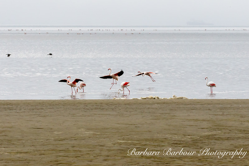 Flamingos in different positions