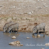 Warthogs at watering hole