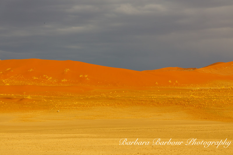 Oryx in the Sand dunes of Sossusvlei