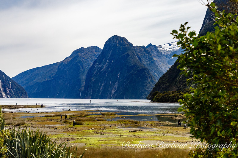 Milford Sound area, New Zealand
