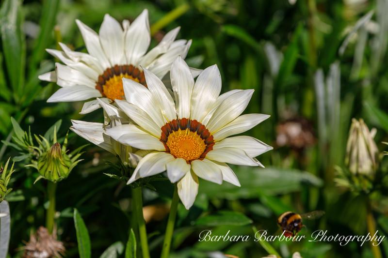 flowers inbotanical gardens, Queenstown