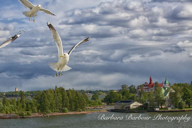 Gulls over Helsinki, Finland