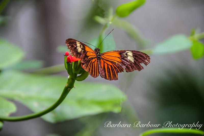 Butterfly on Flower, <br /> Amazon, Peru