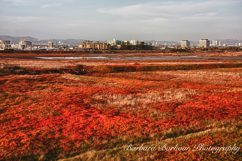 Ballona Wetlands with LA in distance