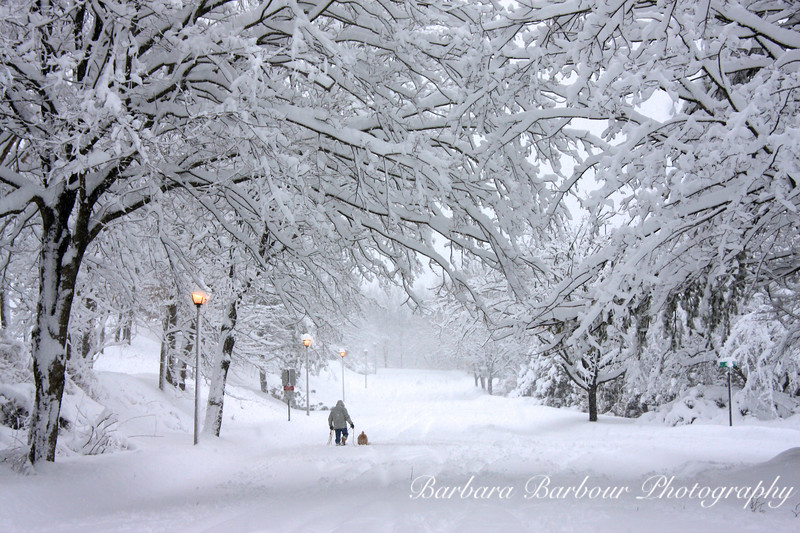 Walking the dog in a Winter Snow Storm