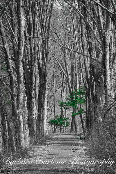 Green tree at end of path in early spring, Delaware Water Gap
