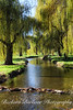 Weeping willows in Rose Garden, Allentown
