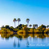 Reflections on the Great Zambezi River