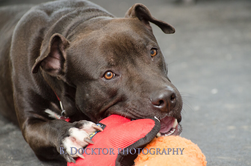 1403_AFF Dogs_021