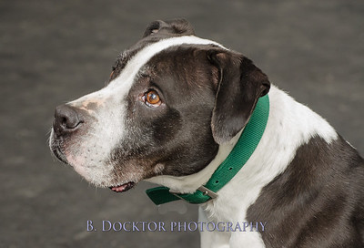 1403_AFF Dogs_038