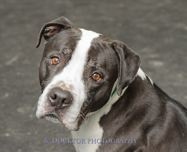 1403_AFF Dogs_044