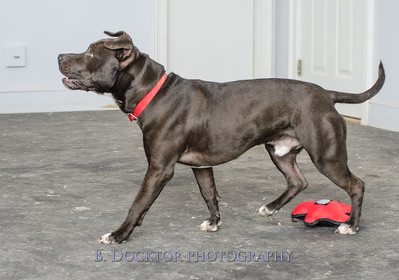 1403_AFF Dogs_016