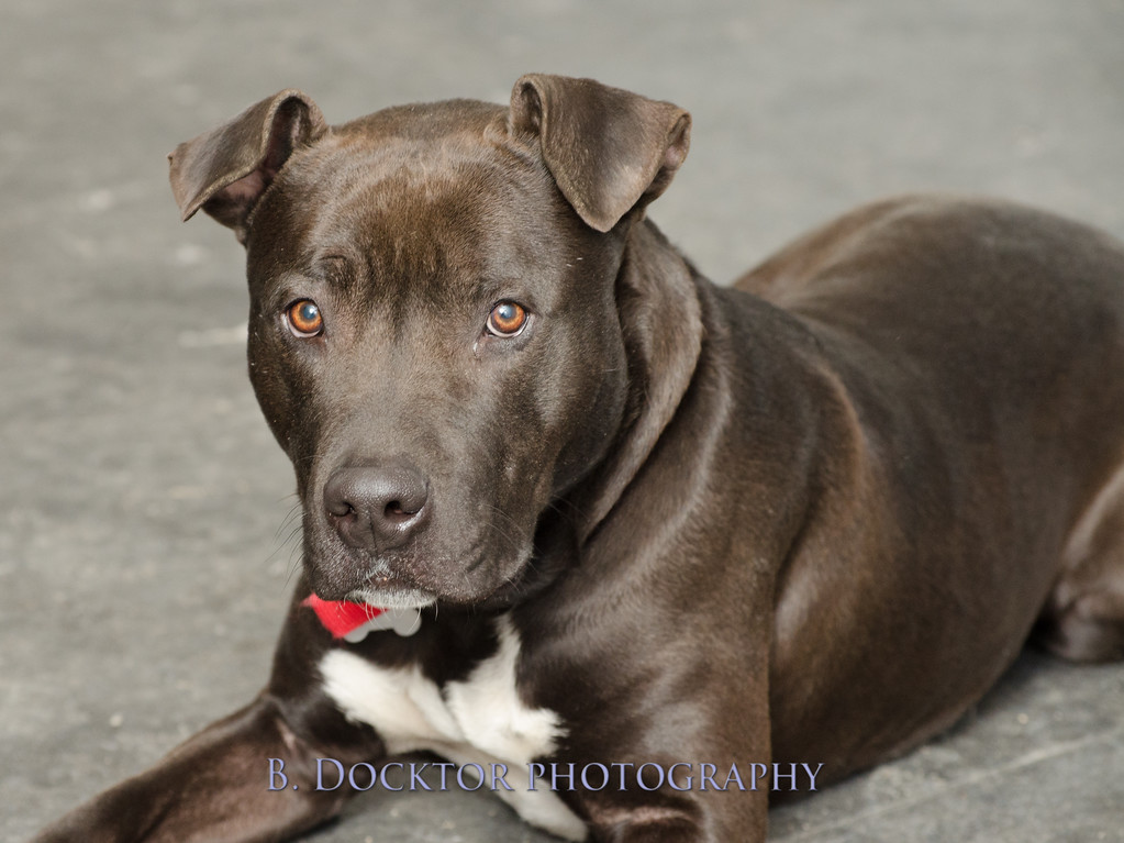 1403_AFF Dogs_008