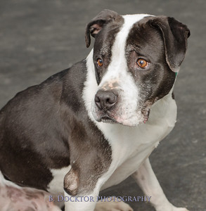1403_AFF Dogs_043