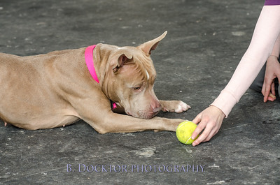 1403_AFF Dogs_080