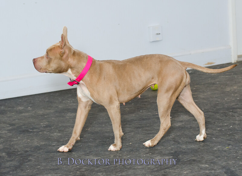 1403_AFF Dogs_070