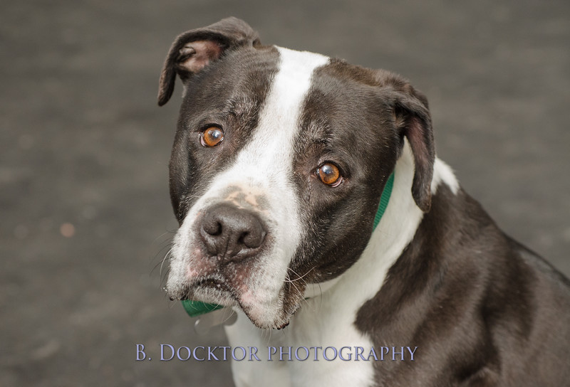 1403_AFF Dogs_039