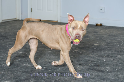 1403_AFF Dogs_077