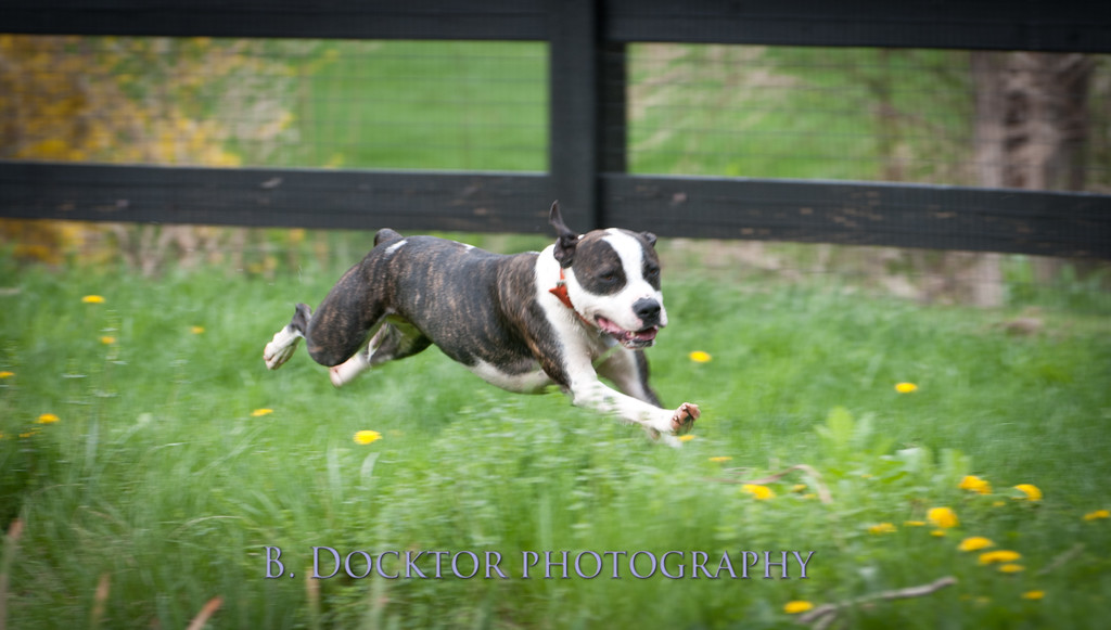 AFF Dogs-222