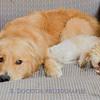 1408_Braffett dogs_301