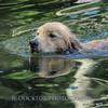 1408_Braffett dogs_041