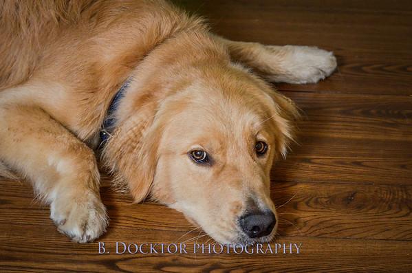 1408_Braffett dogs_311