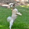1408_Braffett dogs_167