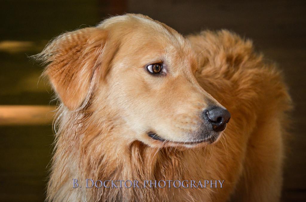 1408_Braffett dogs_312