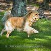 1408_Braffett dogs_082