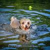 1408_Braffett dogs_243