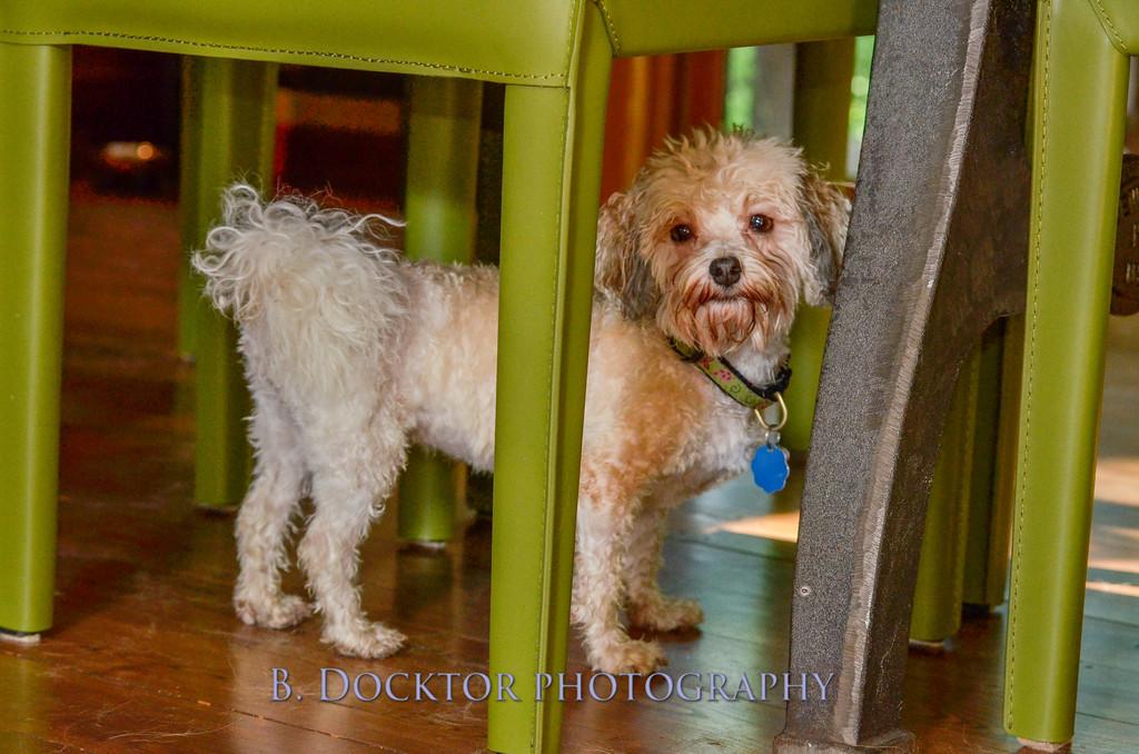 1408_Braffett dogs_283