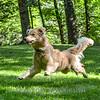 1408_Braffett dogs_116