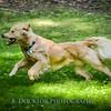 1408_Braffett dogs_135