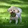 1408_Braffett dogs_058