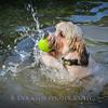 1408_Braffett dogs_233