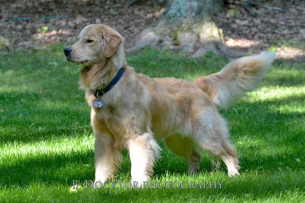 1408_Braffett dogs_070