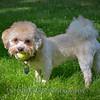 1408_Braffett dogs_144