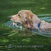 1408_Braffett dogs_018