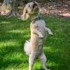 1408_Braffett dogs_160