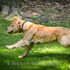 1408_Braffett dogs_137