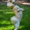 1408_Braffett dogs_170