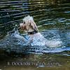 1408_Braffett dogs_212