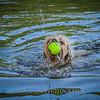1408_Braffett dogs_236