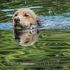 1408_Braffett dogs_031
