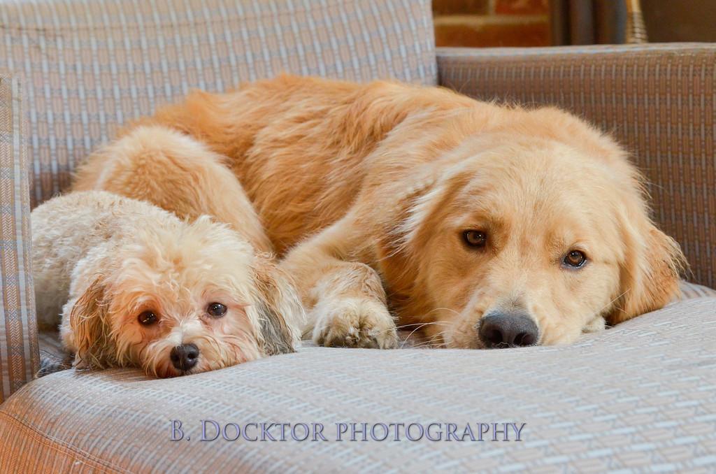 1408_Braffett dogs_291