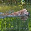 1408_Braffett dogs_178